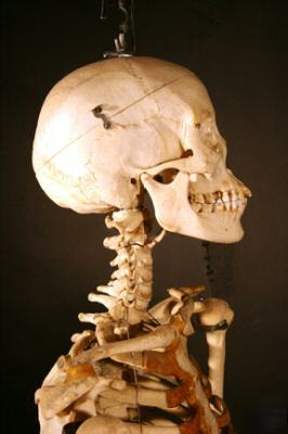 Fully Articulated Real Human Skeleton Img